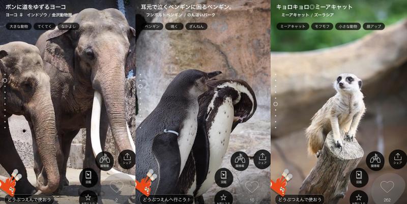"""5G時代へ!KDDIが提案する""""デジタル×リアル""""動物園"""